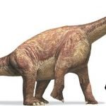 Camarasaurus 150x150, Planeta Incógnito