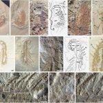 Imagenesfosilweb 150x150, Planeta Incógnito